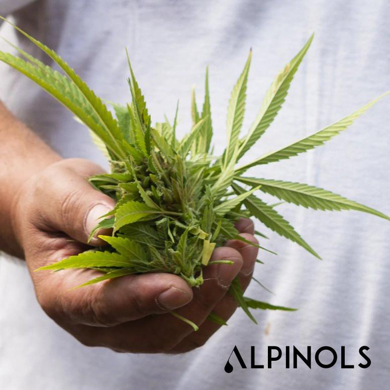 Alpinols CBD Öl-Tropfen und Kosmetik bei Cannavalley